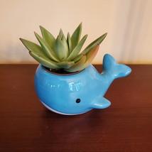 "Ceramic Whale Planter with Succulent, live plant, 4"" blue animal pot, Echeveria"