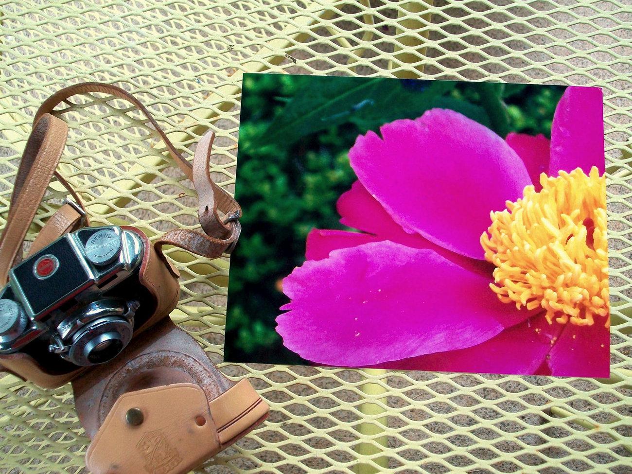 Fushia Pink Peony Flower Photograph 8X10 Art Floral Photography Nature Print