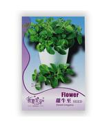 _a_original-packaging-60-pcs-bag-sweet-oregano-seed-best-garden-plants-vegetable-seeds_thumbtall