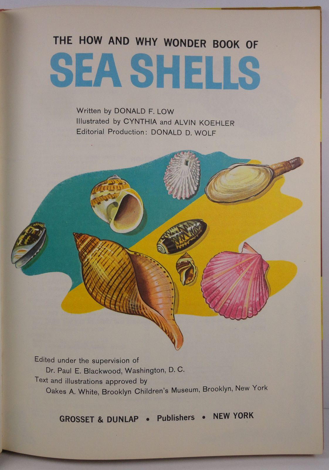 The How and Why Wonder Book of Sea Shells Donald F. Low