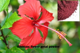 Hibiscus Flower Petal Powder Benefits In And 50 Similar Items
