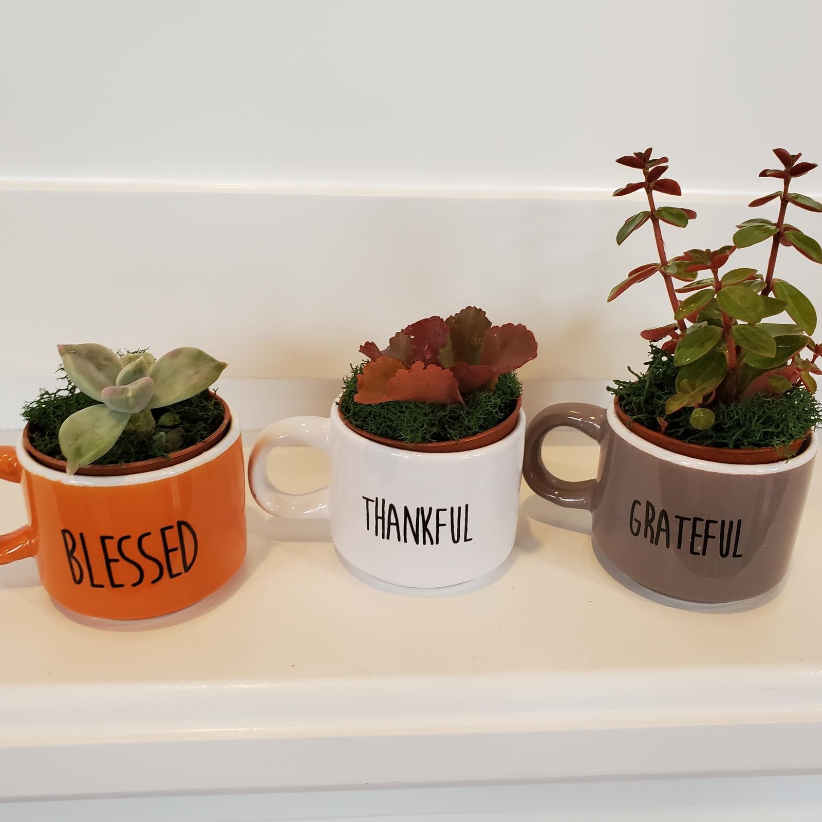 Espressomugtrio succulents 1