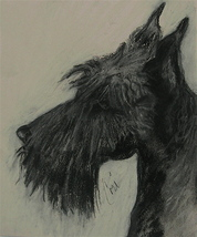 Scottish Terrier Dog Art Pastel Drawing Solomon - $230.00