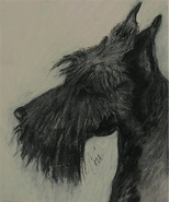 Scottish Terrier Dog Art Pastel Drawing Solomon - $230.00