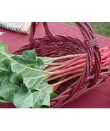 Victoria Rhubarb 100 seeds * Non GMO Vegetable * - $5.99