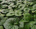 61h9wk4083l. sl1500  thumb155 crop