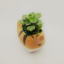 """Echeveria Succulents in Laughing Cat Planters, Live Plants in 2.5"""" Kitten Pots image 6"""