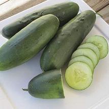 Raider F1 Cucumber Seeds (25 Seeds) - $3.79