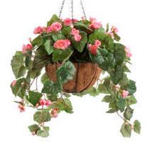Fully Assembled Begonia Hanging Basket by OakRidge Outdoor-Pink - $58.99