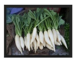 SHIP FROM US Radish, White Icicle Fresh Hand-Packaged Seeds NON GMO SPT5 - $6.00