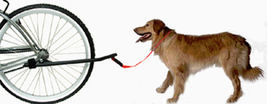 Sunlite Bicycle Dog Leash Attachment - Black/Red - $25.80