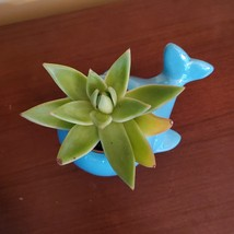 "Ceramic Whale Planter with Succulent, live plant, 4"" blue animal pot, Echeveria image 5"