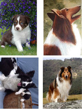 Lot Of 6 Collies Dog Fabric Panel Quilt Squares - $6.99