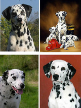 Lot Of 4 Dalmation Dog Fabric Panel Quilt Squares - $4.99