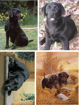 Lot Of 4 Black Lab Dog Fabric Panel Quilt Squares - $4.99