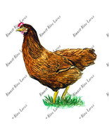 Rhode Island Red Chicken Sticker Decal Hunt Far... - $5.99 - $8.99