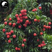 Buy Litchi Fruit Tree Seeds 60pcs Plant Litchi Chinensis For Lychee Li Zhi - $9.99