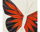 Monarch2 thumb155 crop
