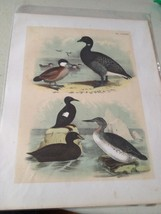 Collection of Birds Water ~ 1870 Bird Lithograph Print Hand Colored - $27.83