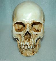 1:1 High Quality Skull Human Anatomical Anatomy Head Medical Model New - $23.29