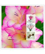 Gladiolus Bulbs, Not Seeds, Flower Symbolizes Longevity, Pink Color,FREE SHIP US - $9.99 - $28.99