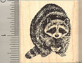 Raccoon Rubber Stamp, North American Racoon, Co... - $12.95