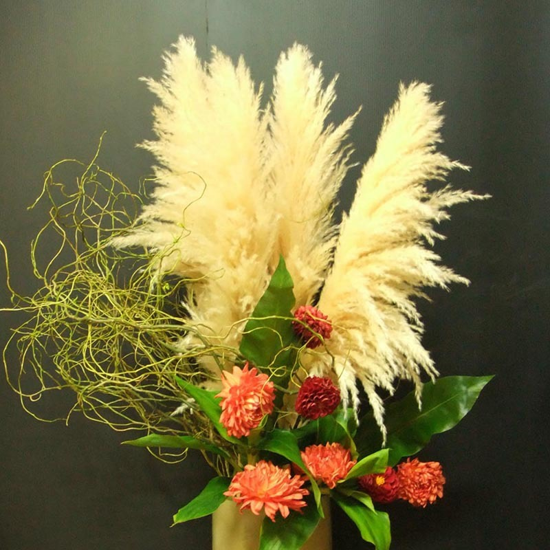 Yellow pampas grass seeds flower garden potted ornamental for Yellow ornamental grass