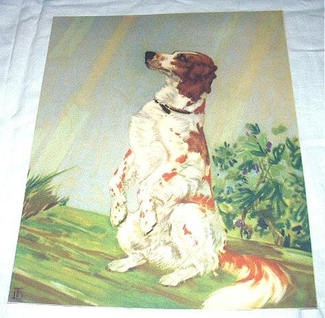 Old Setter Dog-Diana Thorne-Vintage Lithograph-Backside is Cocker Spaniel