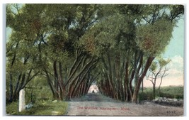 Early 1900s The Willows, Annisquam, MA Postcard  - $9.28