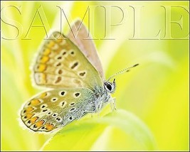 Butterfly Photograph 8X10 New Fine Art Color Print Picture Photo Nature ... - $7.95