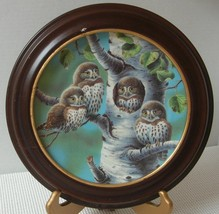 THE TREE HOUSE NORTHERN PYGMY OWLS Joe Thornbrugh COLLECTOR PLATE  FRAME... - $21.82