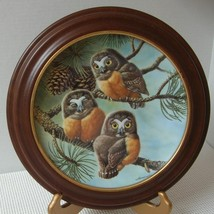 FORTY WINKS: SAW-WHET OWLS by Joe Thornbrugh COLLECTOR PLATE & FRAME Bab... - $21.82