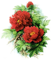 Chart Needlework Crafts DIY Counted Cross Stitch Patterns PDF Red Peonies - $8.99