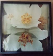 "Flower Shadow Box Print Photograph Cream Black Gold Black Wood Frame 21""... - $39.59"