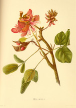 Flower Decorative Poster.Fine Graphic Art.Florist Wall Interior Design 2503 - $11.30+