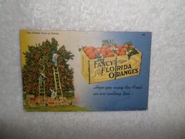1938 Fancy Florida Oranges Advertising Postcard Curt Teich Chicago - $4.00