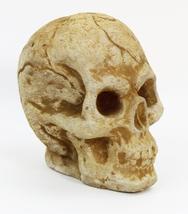 Skull Ornamental Concrete Statue  - $49.00