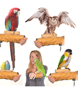 Avianweb™ Arm & Hand Perch - Patent Pending / M... - $35.50 - $42.50