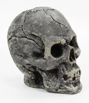 Skull Ornamental Concrete Statue  - $39.00