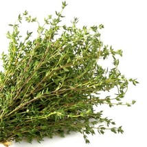 SHIP FROM US 400,000 Common German Winter Thyme Herb Seeds, ZG09 - $82.76