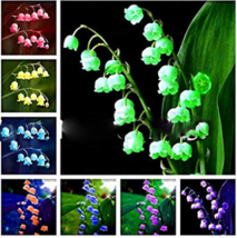 Lily of The Valley Flower Bonsai, Bell Orchid Bonsai Plants, Rich Aroma, 100 pcs - $11.50