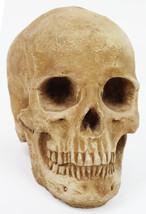 Skull Concrete Ornamental Statue  - $59.00