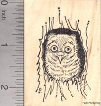 Screech Owl Rubber Stamp, Roosting in Tree J17601 WM - $14.95