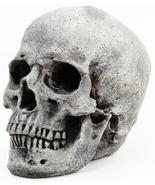 Skull Concrete Ornamental Statue - $53.00