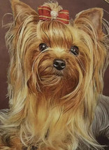 Danbury Mint Cherished Yorkies Collector Plate Limited  Someone To Comfort - $14.85