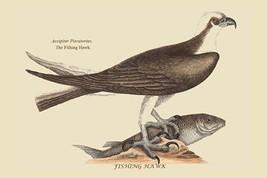 Fishing Hawk by Catesby Catesby #2 - Art Print - $19.99+