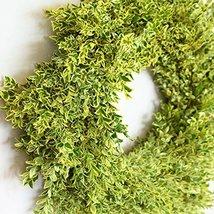 English Boxwood Wreath - $77.42