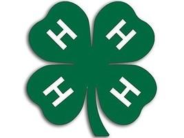 """4""""  4H GREEN CLOVERHELMET BUMPER STICKER DECAL MADE IN USA - $13.53"""