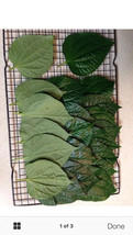45 Fresh Betel Leaves - La Lot - Medium To Large Size- M56 - $15.01