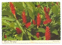 Hawaiian Red Ginger Flower 1969 Postcard 4X6  - $4.99